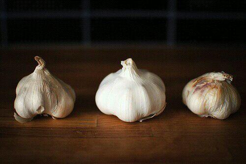 大蒜成长记之创业篇