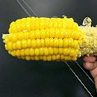 现煮嫩玉米