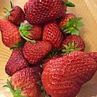 超甜有机草莓