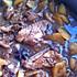 超级下饭——土豆鸡翅麻辣香锅