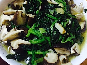 珍珠香菇、干虾仁香炒小油菜的全部作品