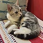 悠闲的猫2016