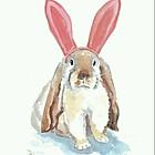 粉红色长耳兔Elaine