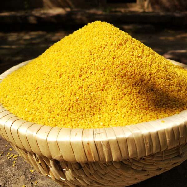 齐鲁荟 陕北米脂小米3斤